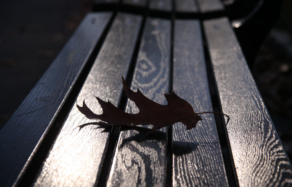 Leaf on a bench in Central Park by Patrick Griffin